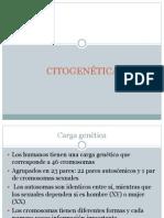 18.- Citogenetica1