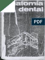 Anatomía dental_Ramón García V