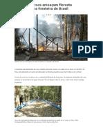 Plantios de coca ameaçam floresta amazônica na fronteira do Brasil