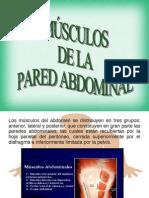 Morfología abdominal.