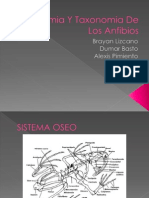 Anatomia Y Taxonomia