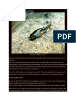 Memancing Ikan Gabus