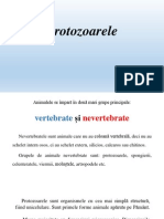 Protozoa Rele