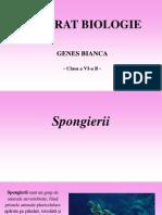 Spongierii