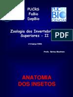 Morfologia Interna (1)
