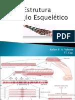 02 - Estrutura do Músculo