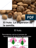 3 El Fruto Dispersion Ppt