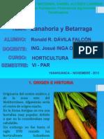 Expo Zanahoria y Betarraga