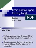 Bacillus ClostridumBacillus Clostridum Engl Engl
