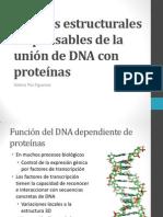 Motivos estructurales responsables de la unión de DNA.pdf