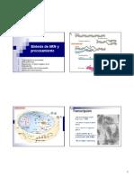5. Síntesis de ARN y procesamiento