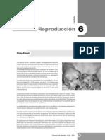 6° Capítulo - Reproducción en Caninos