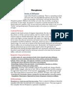Phosphorus Summary