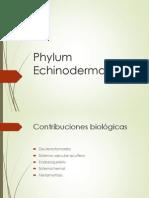 echinodermata 2