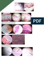 gambar histologi dari mikroskop