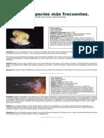 2-Medusas Especies.pdf