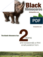 Black rhinoceros (Diceros bicornis) - In danger of disappearing