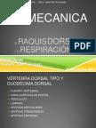 BIOMECANICA EL RAQUIS DORSAL Y LA RESPIRACIÓN