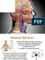 Sistema Nervioso 501 Vespertino