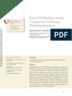 Yeast ATP Binding Cassette