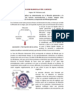 54.Filtracion_Glomerular