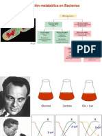 Reg Metabolic A
