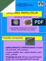 91267820-153-cresterea-prepelitelor