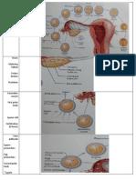 Anatomy Test 2b