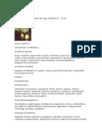 Caju - Anacardium occidentale L. - Ficha Completa Ilustrada