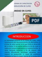 Sanidad en Cuyes