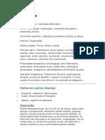 Calêndula - Calendula officinalis L. - Ficha Completa Ilustrada