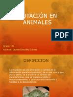 MUTACIÓN EN ANIMALES