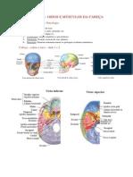 GRUPO I - TRABALHO 1 - Ossos e musculos.docx