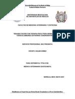 Rehabilitacion Con Terapia Fisica Para Hernias Discales Toracolumbares en Perros Condrodistroficos