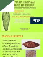 Fasciola h.