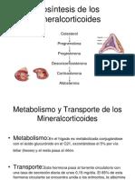 Biosíntesis de los Mineralcorticoides