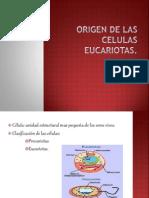 ORIGEN DE LAS CELULAS EUCARIOTAS.pptx