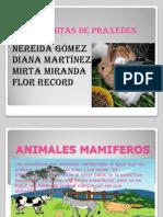 animales mamiferos1