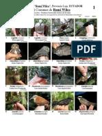RM-095 Aves Comunes de Rumi Wilco.pdf