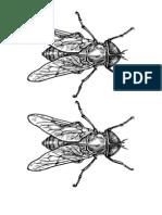 esticker insectos