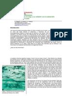 Las-micorrizas-en-trigo-y-su-relación-con-la-absorción-de-fosforo-del-suelo.pdf