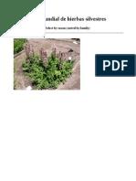 Compendio Mundial de Plantas Silvestres 21000 Especies