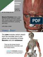 VB_Muscle_Premium_Preview_101613.pdf