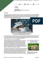 Dicas Pet - Ensinando a Fazer as Necessidades No Lugar Certo