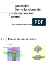 [Tema 4.0] Organización anátomo-funcional del sistema nervioso central