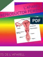 Aparell reproductor femení