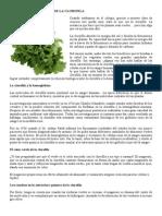 LOS PODERES CURATIVOS DE LA CLOROFILA.doc
