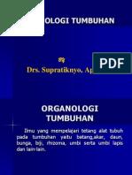 ORGANOLOGI TUMBUHAN