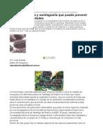Descubren Un Alto Poder Oxidante Para El Organismo en Las Moras Negras