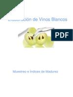 VINIFICACIÓN_EN_BLANCO_2011